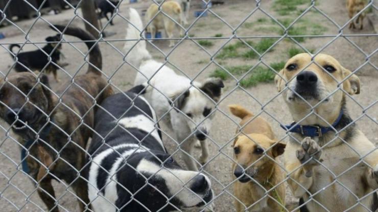 refugio perros
