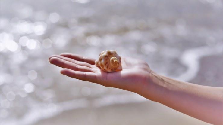no te lleves los caracoles de la playa