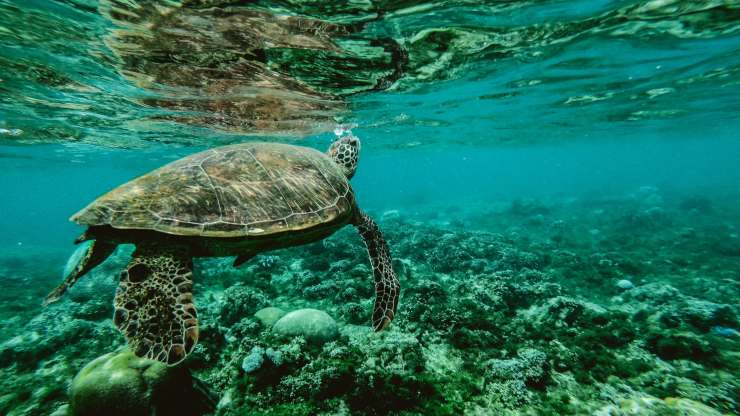 Decenio de las Ciencias Oceánicas para preservar los océanos