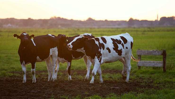 La producción ganadera es una de las principales fuentes globales de emisiones de metano (Foto de Matthias Zomer - Pexels).