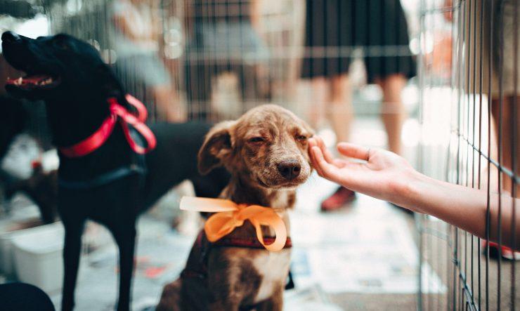 Cachorro adopcion