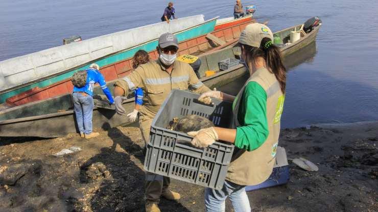 SOS por tortugas e iguanas de Colombia en Cuaresma