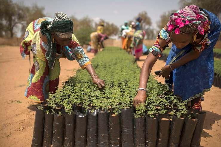 Senegal Gran Muralla Verde