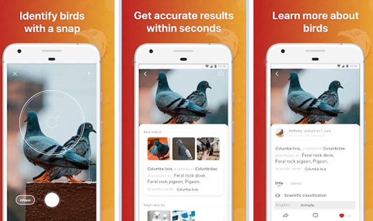 app para identificar aves