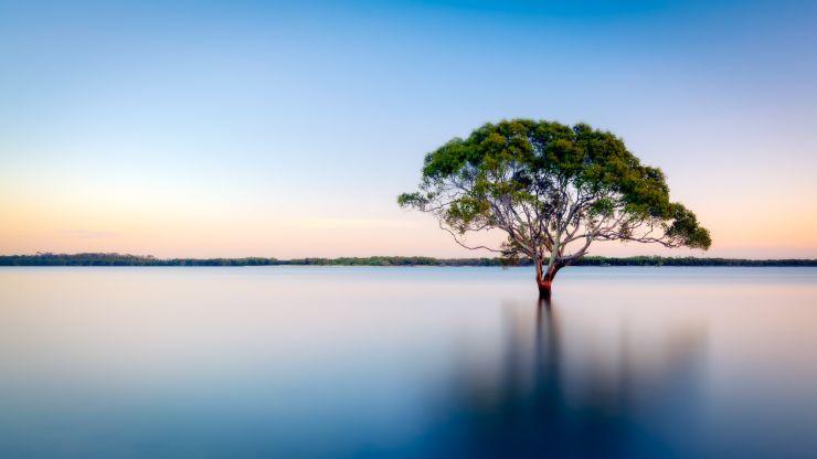 Día de los Bosques: ¿Sabes cuánto estamos perdiendo con su desaparición?