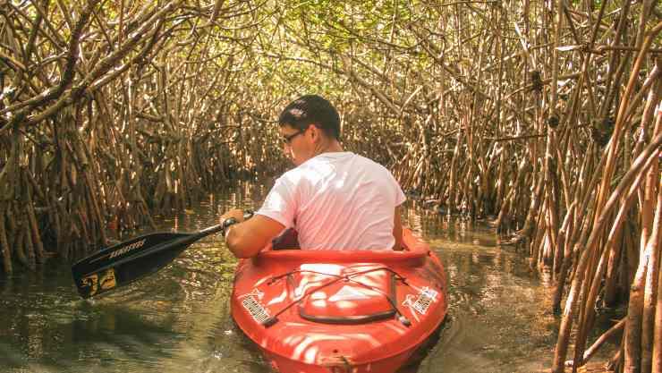 la importancia de los manglares