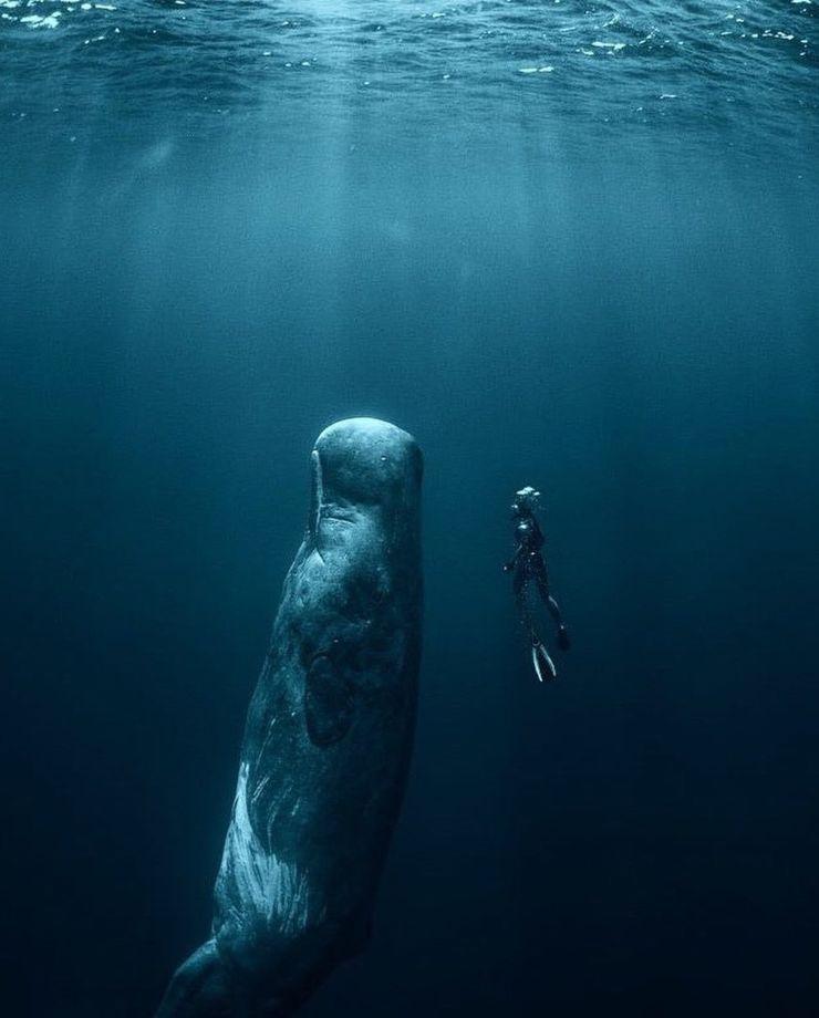 Nadando con una gran ballena