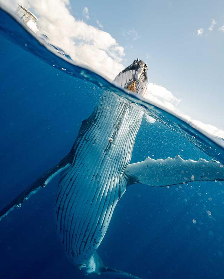 La ballena azul es el mamífero más grande que habita en la Tierra (Foto de Elianne Dipp - Pexels).