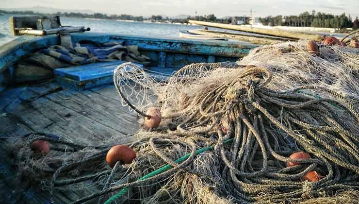 Las industrias de salmón y pesqueras ponen en riesgo a las ballenas azules (Foto de Bedis ElAcheche - Pexels).
