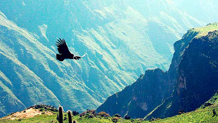 El Cañón del Colca impacta por sus vuelos y su riqueza cultural y natural (Foto de Peru.Travel).