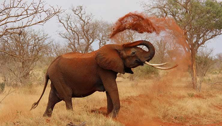 Los elefantes de la sabana habitan en el desierto (Foto de Pixabay - Pexels).