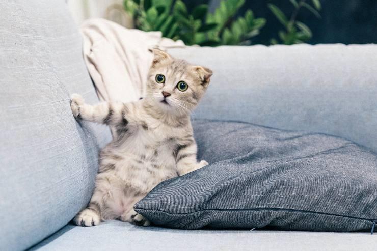 Curiosidades sobre los ojos de los gatos
