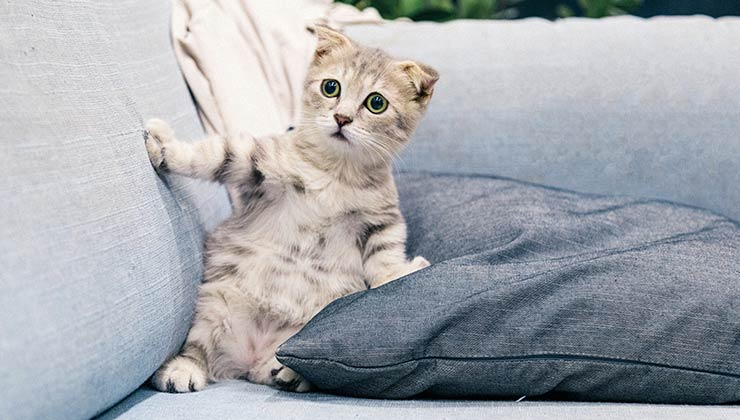Científicos descubrieron que la variante británica de coronavirus puede afectar a perros y gatos (Foto de Tranmautritam - Pexels).