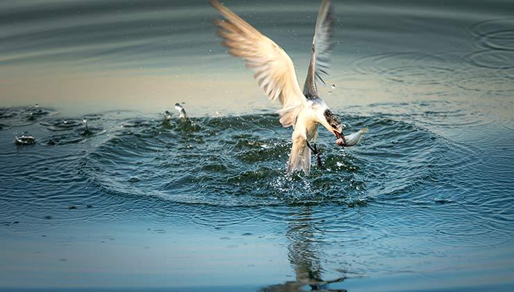 Las aves se alimentan de peces luego nutren su excreciones (Foto de Foto de Quang Nguyen Vinh - Pexels).