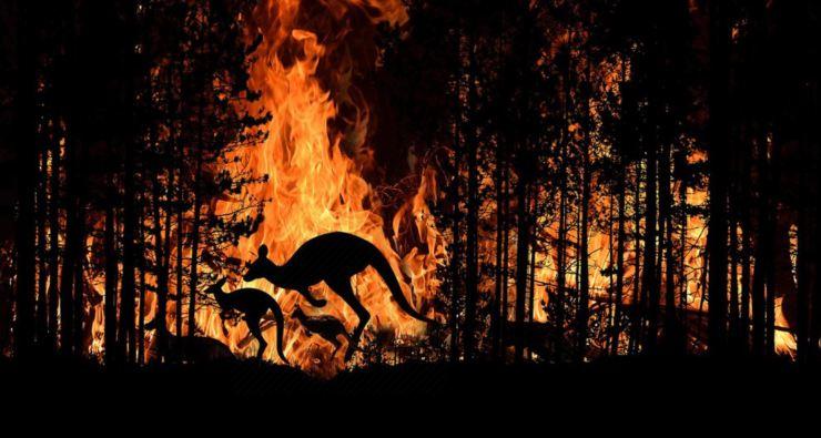 incendio animales