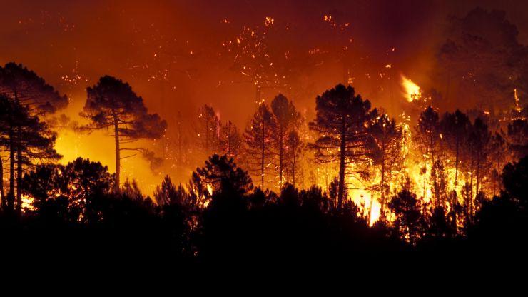 incendios forestales intencionados