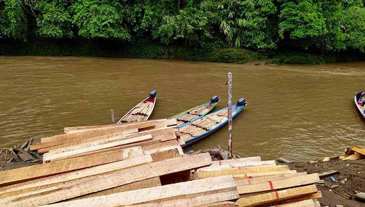 La explotación de madera balsa llevó a la deforestación de la selva en Ecuador (Foto de Fundación Pachamama).