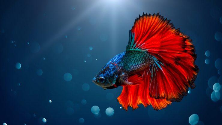 8 de los peces más bonitos que habitan los océanos