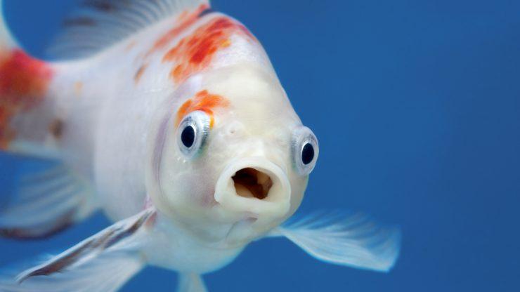 los peces de agua dulce del planeta, en peligro de extinción