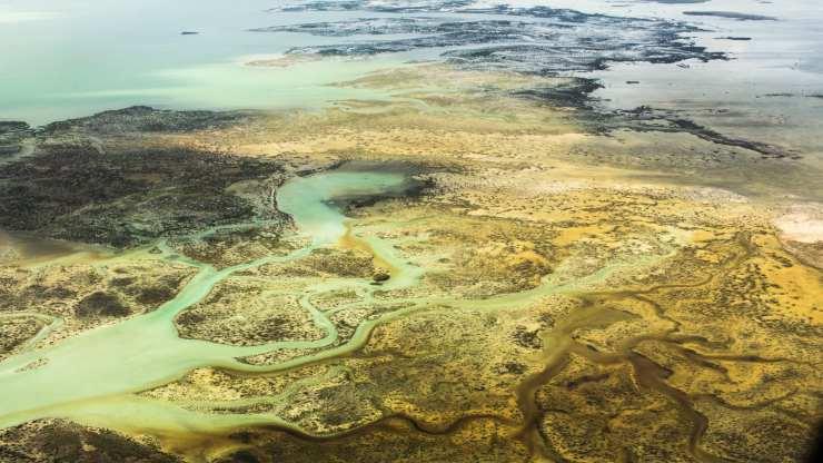 Los manglares son vitales para ciclo de carbono