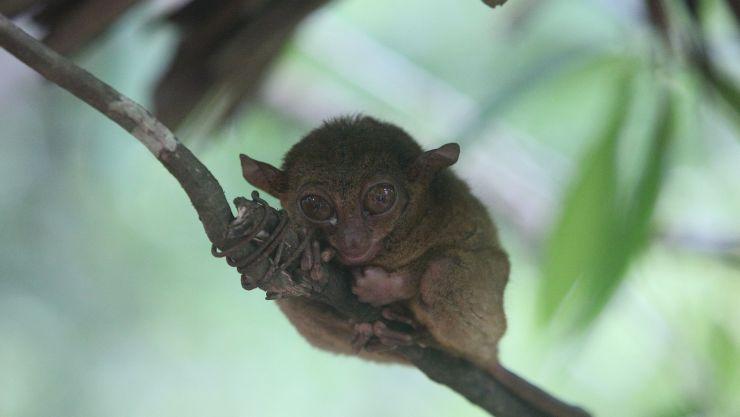 los animales mas pequeños del mundo