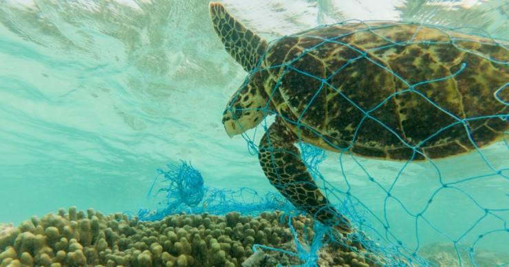 Costa Rica veto la ley de pesca por arrastre