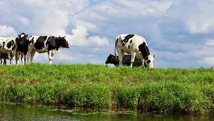 Un cambio en la dieta de las vacas reduciría en un 82 por ciento la emisión de metano a la atmósfera (Foto de Matthias Zomer - Pexels).