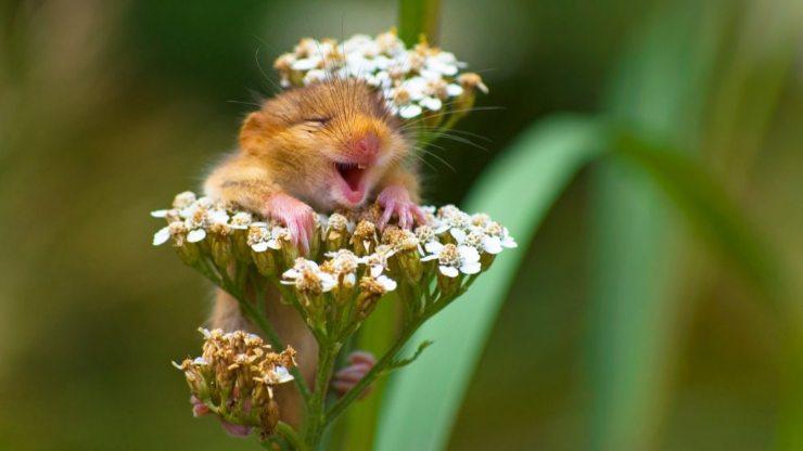 la risa y los beneficios para la salud