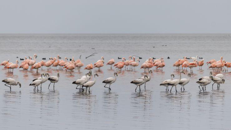 El lago salado Ansenuza será reserva natural
