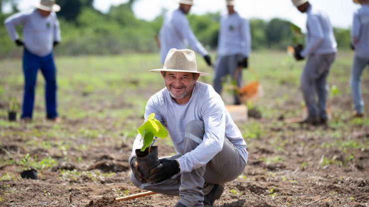 Araguaia: el mayor proyecto de reforestación de Latinoamérica