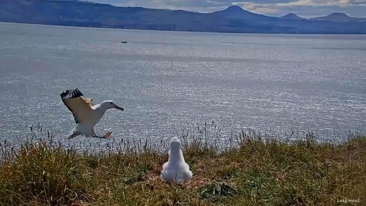 Aterrizaje albatro 2
