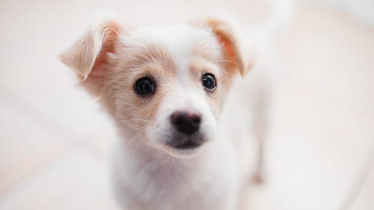¿Vas a adoptar un cachorro? Ten en cuenta estos consejos