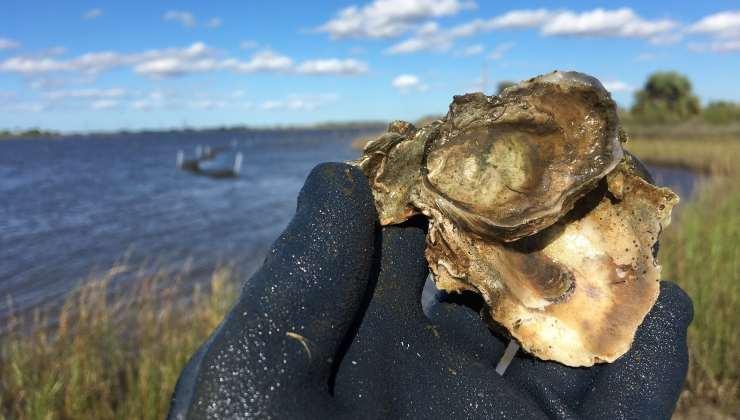 cultivo de ostras en Texas