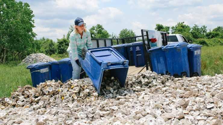 cultivo de ostras en Texas, Bahia de Galveston