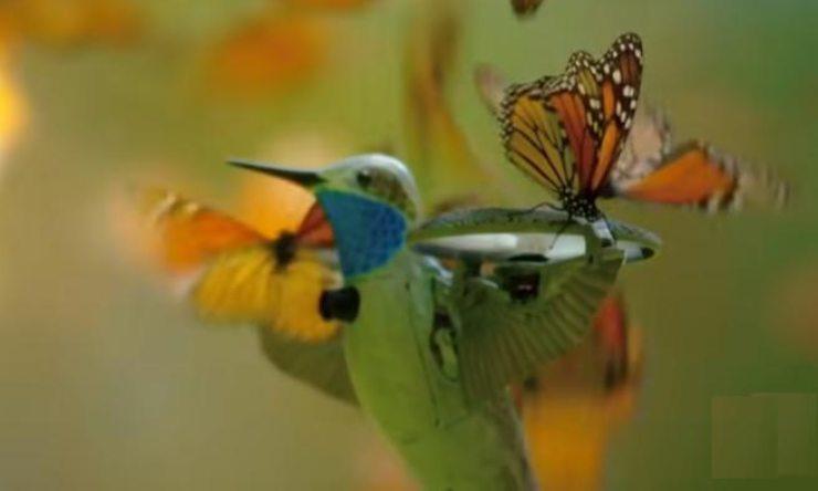un robot colibri filma el vuelo de las mariposas monarca