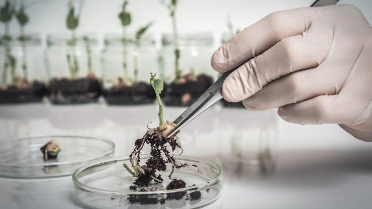 ¿Los Organismos Modificados Genéticamente son buenos para la salud?