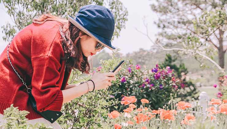 Las aplicaciones para observar plantas son ideales para personas curiosas (Foto de Hoang Chouong - Pexels).