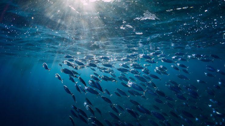 Día Mundial del Atún: Sólo queda un 3% de atún rojo en el mundo