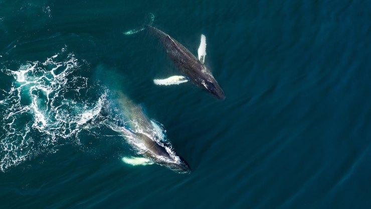 En peligro: por qué Europa es una amenaza para 33 especies de cetáceos