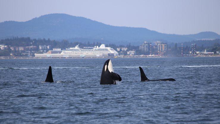 ballenas y barco