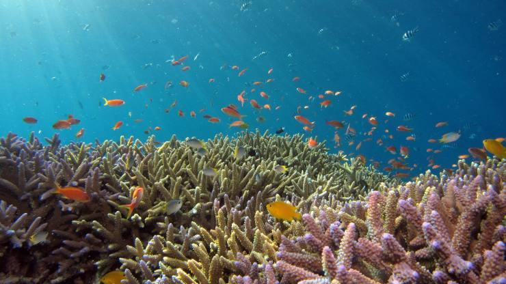 Realiza una inmersión virtual entre los arrecifes de coral del mundo