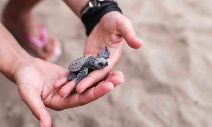 historias de rescate animal