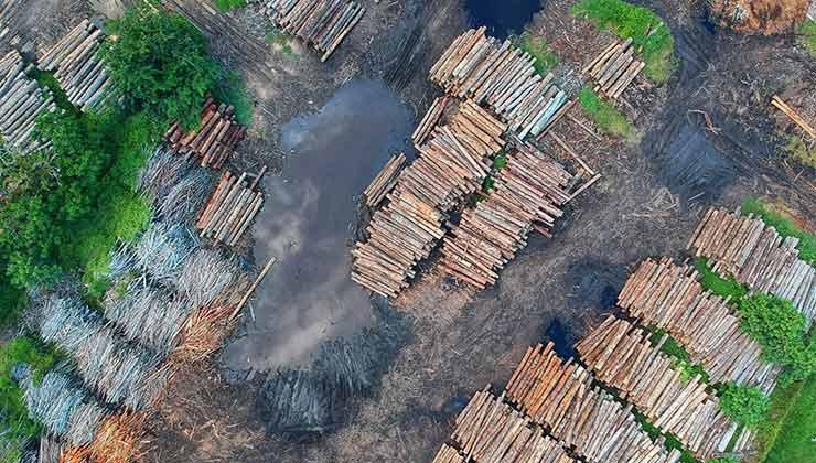 La deforestación es un problema global que impacta a la selva amazónica (Foto de Foto de Pok Rie - Pexels).