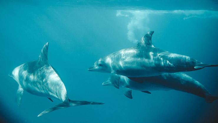 Las actividades petroleras, la pesca y la contaminación ponen en riesgo a los cetáceos que habitan en aguas europeas (Foto de Taryn Elliott - Pexels).
