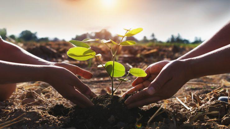 10 acciones muy sencillas para celebrar a la madre Tierra en su día