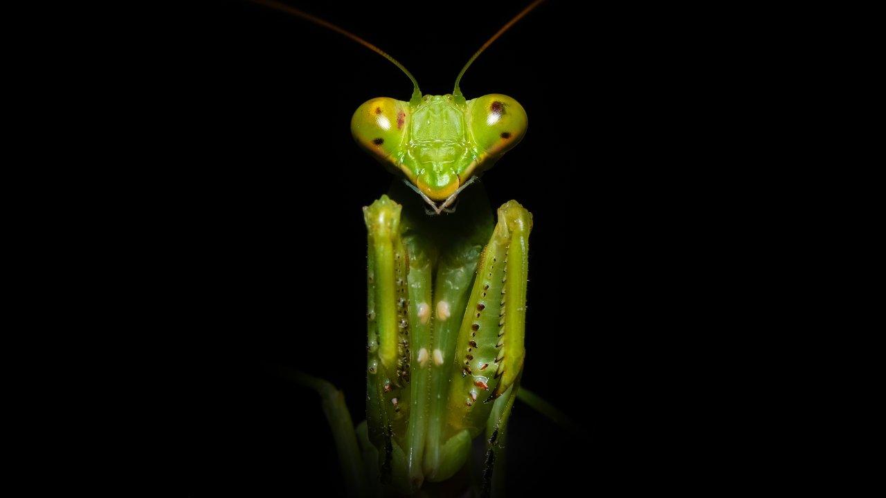 un insecto tan temido como adorado