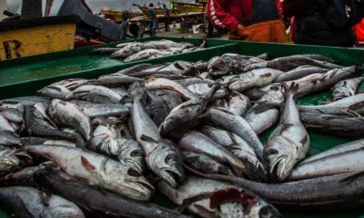 pesca de la merluza en Chile