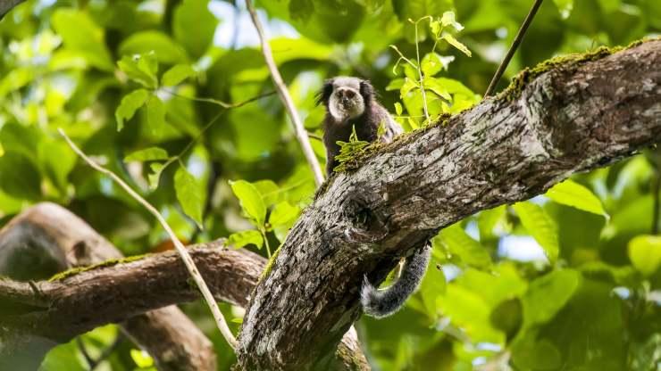 El 94% de las especies animales de América Latina y el Caribe, en peligro