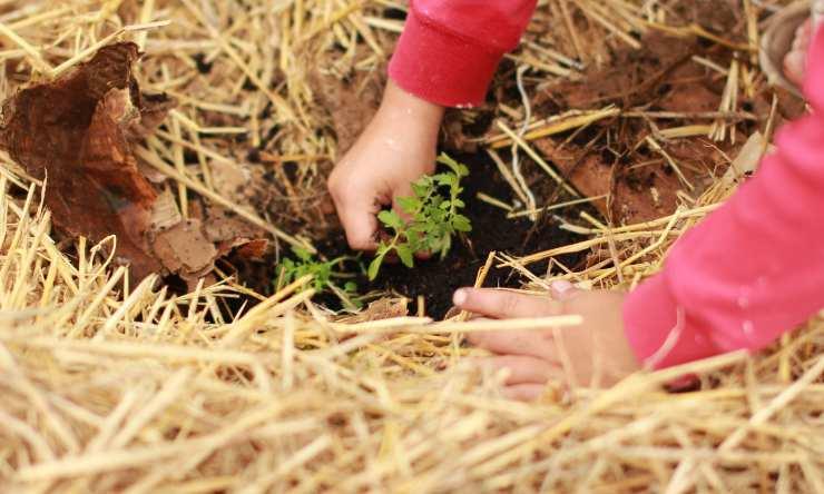 usos ecologicos del carton para huerto o jardin