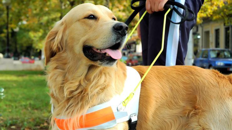 Día del Perro Guía: Una compañía inigualable para personas ciegas